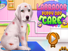 Labrador Puppy Day Care