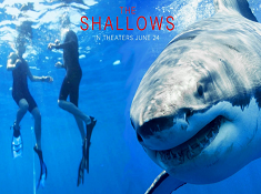 The Shallows Hidden Numbers